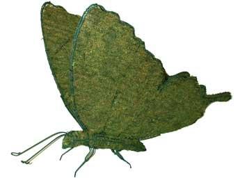 butterflymossedmd.jpg