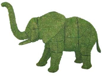 elephantmossedmd.jpg