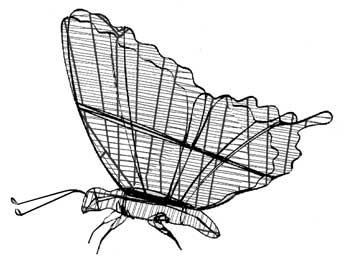 butterflyframemd