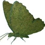 butterflymossedmd
