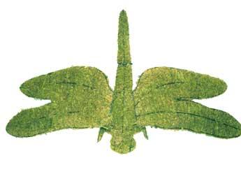 dragonflymossedmd