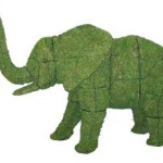 elephantmossedmd