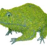 frogmossedmd