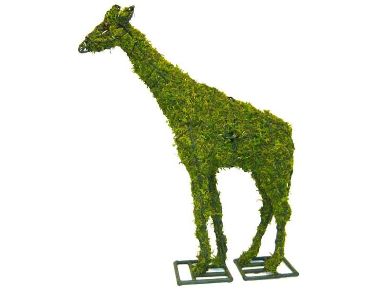 giraffemossedlrg
