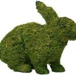 rabbitsitmossedmd