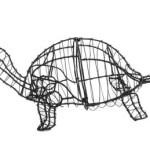 turtleframemd