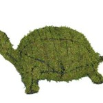 turtlemossedmd